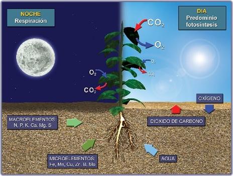 La fotosíntesis está condicionada por cinco principales factores