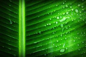 Фотосинтез и его регуляция