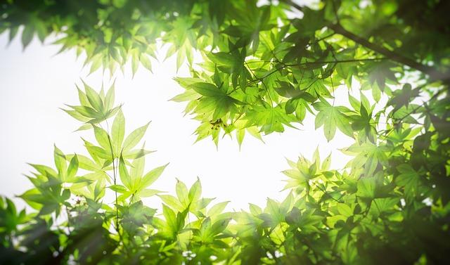Новый рекорд. Искусственный фотосинтез.