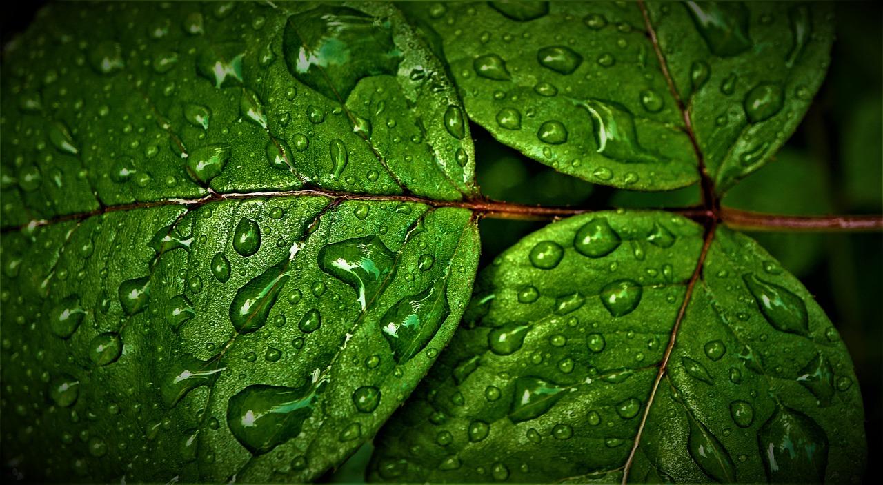 Кислород (О2) — это, пожалуй, один из самых важных элементов на Земле!